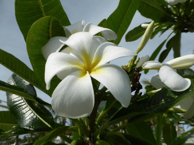 Magnifique Fleur en Floride