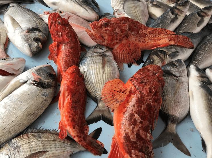 Le marché de Marseille avec tous ses poissons colorés et délicieux